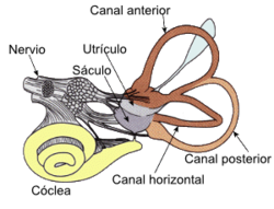 diagram of a body part